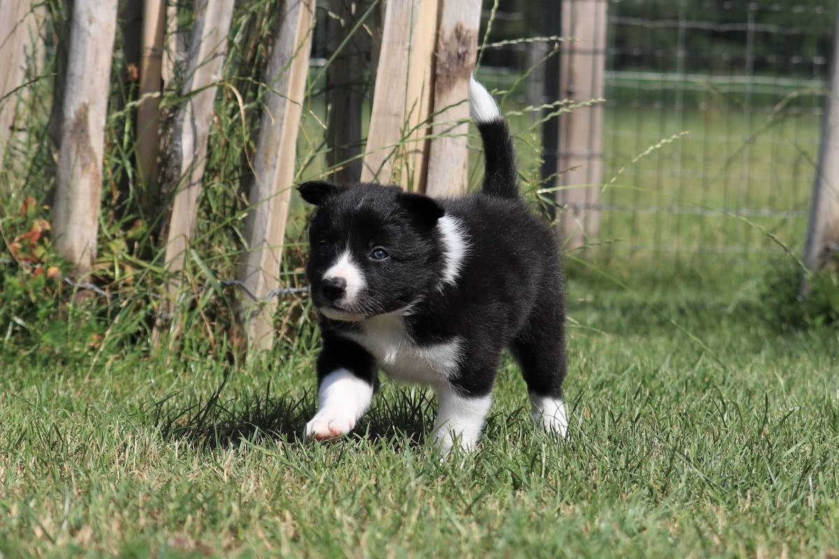 male 1 available